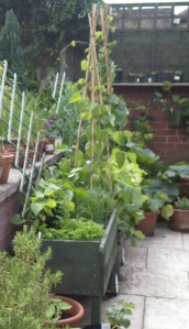 raised beds for accessible gardening