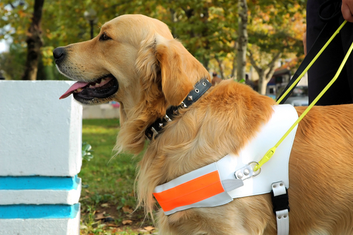 Assistance Dogs For The Disabled